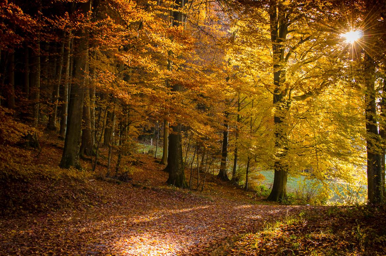 Herbstspaziergang Krauchthal