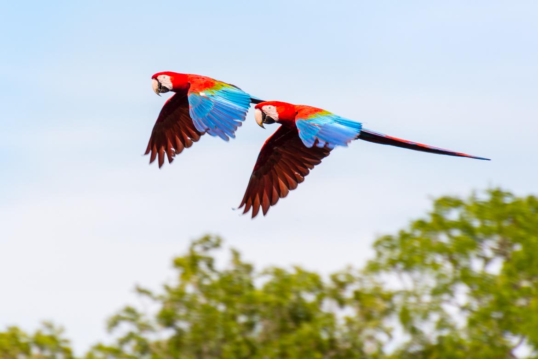 Pantanal - Bonito
