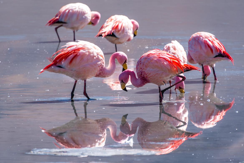 Ruta de las Lagunas - Salar de Uyuni
